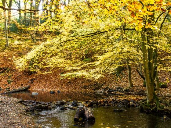 Herbst am Bach