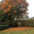 Herbst - Garten 01 I-PAD / Belichtung 1 /  231 s Blende f / 2.4Brennweite 3,3mm ISO-Empfindlichkeit 32