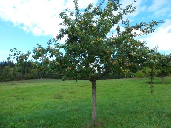 Viele Früchte