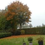 Herbst - Garten 03 LUMIX - iA-Modus / Belichtung 10/800 s Blende f / 3.3 Brennweite 4,3mm ISO-Empfindlichkeit 80