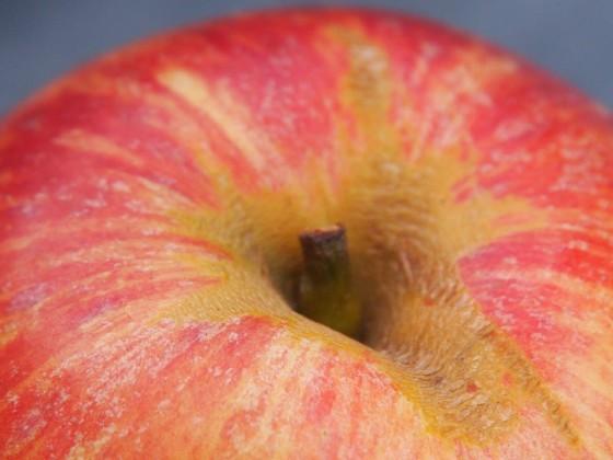 Ein Apfel, Gravensteiner, der bald verwertet werden wird.